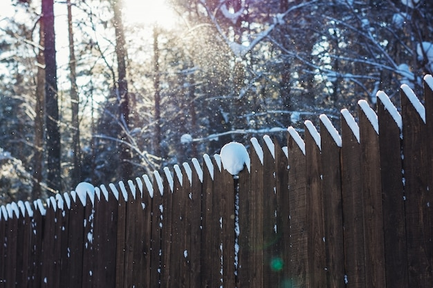 Wooden fence in a pine forest in winter