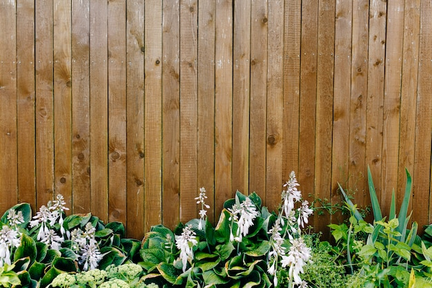 Wooden fence with plants underneath