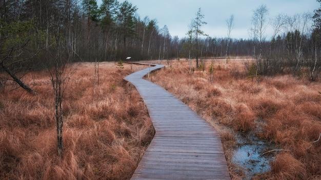 Деревянные настилы тропы на болоте осенью. экологическая тропа в сестрорецке под санкт-петербургом в пасмурную погоду