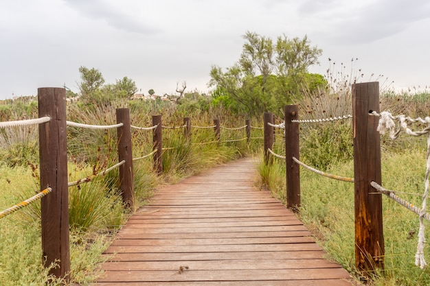 Wooden footbridge in the field among the grass