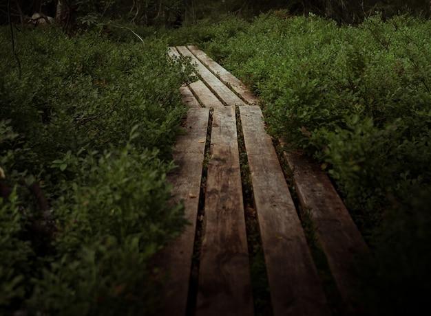 Wooden footpath in the swamp. seidozero, kola peninsula