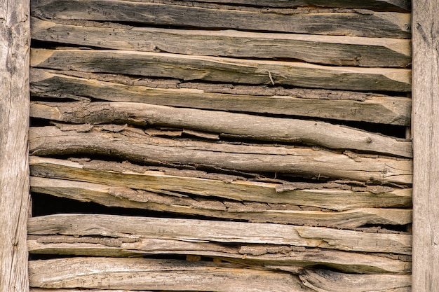 Wooden forest wall texture