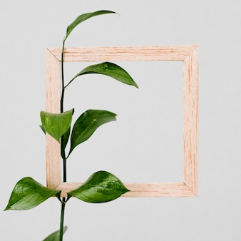 Wooden frame with green leaf