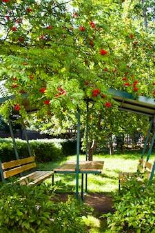 잘 익은 나무 아래 정원에 있는 나무 전망대. 나뭇가지에 마가목 열매