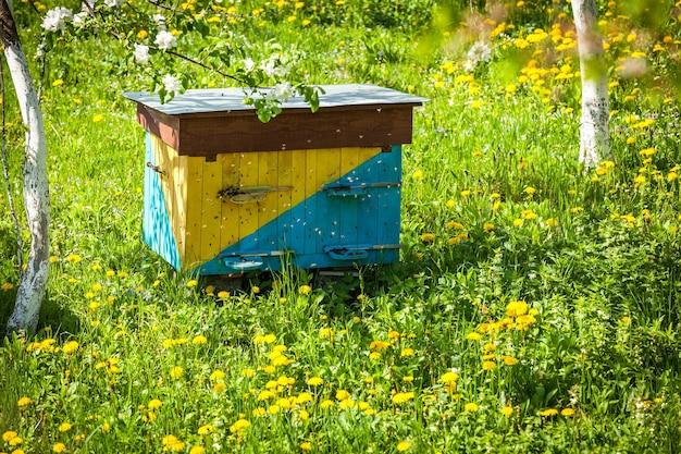 꿀벌을 위한 목조 주택은 노란 꽃들 사이의 초원에 서 있다