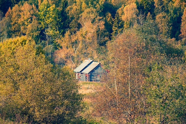 Wooden houses near the autumn forest in the vepsky forest, leningrad region in russia
