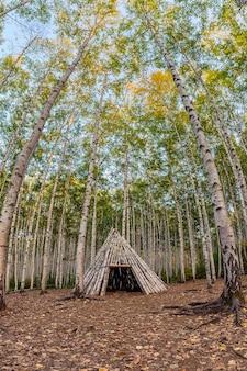 국립 공원에서 가을에 자작 나무 숲에 나무 오두막