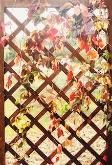 木製の格子がブドウの枝を絡み