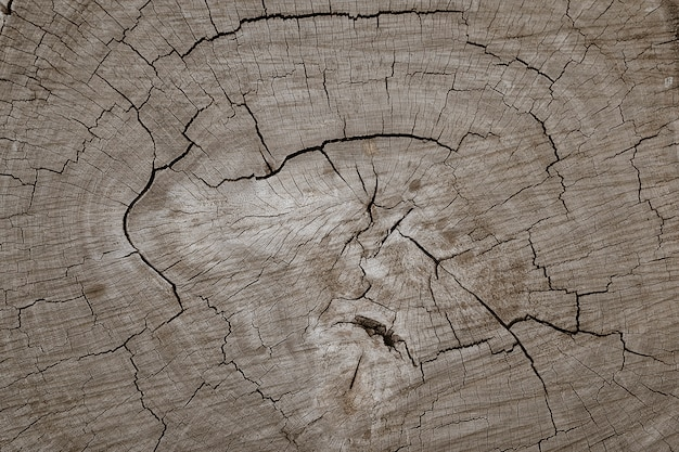 Wooden log tree stump cut texture background