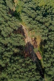松の森の木の丸太