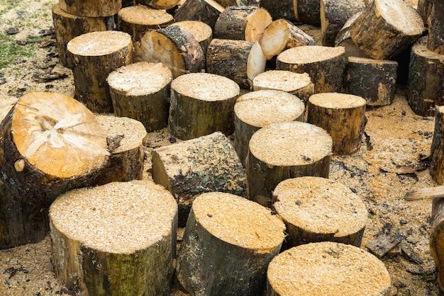 Деревянные бревна дуба и опилки возле лесопилки