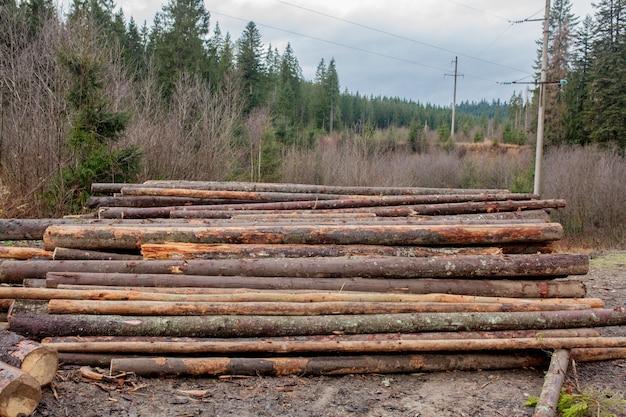 山に積み上げられた、森の中の松林の木の丸太。切り立てたばかりの木の丸太を山に積み上げました。