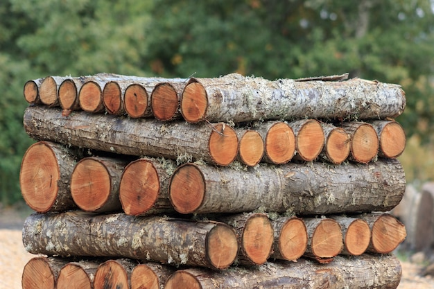 Wooden logs stacked in the forest