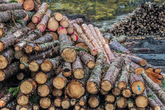大きな山に積み上げられた木の丸太