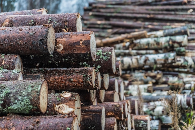 大きな山に積み上げられた木の丸太 Premium写真