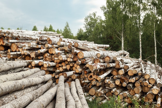 Деревянные бревна с лесом