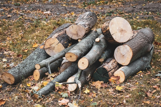 Wooden logs of woods in the park in autumn, stacked in a pile. freshly chopped tree logs