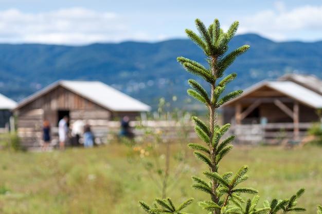 Деревянные горные дома на зеленом поле летом.