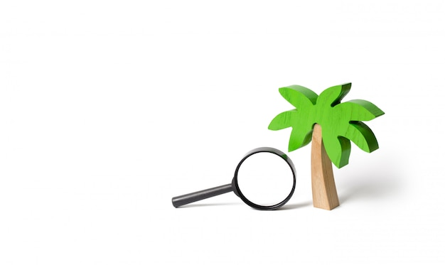 Wooden palm tree and a magnifying glass