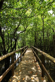 Wooden path full of dry leaves on the ground in the middle of lush mangrove forest. iriomote island.