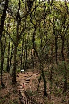Деревянная дорожка в лесу