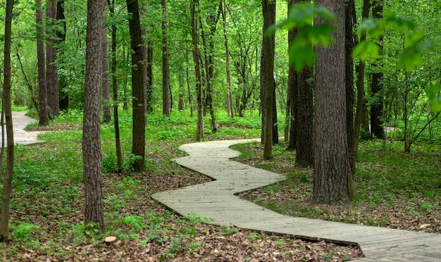 숲속의 나무 길이나 여름 도시 공원의 공원에는 산책과 레크리에이션을 위한 나무 데크가 있는 고품질 사진