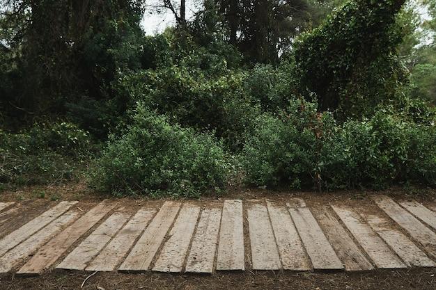 숲에서 나무 경로