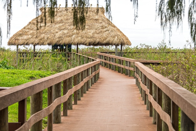 Wooden path on swamp in everglades, florida