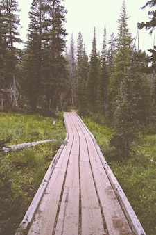 Wooden pathway in a beautiful forest with pine trees