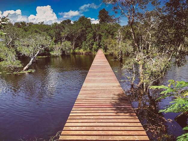 깊은 녹색 숲 호수의 나무 통로