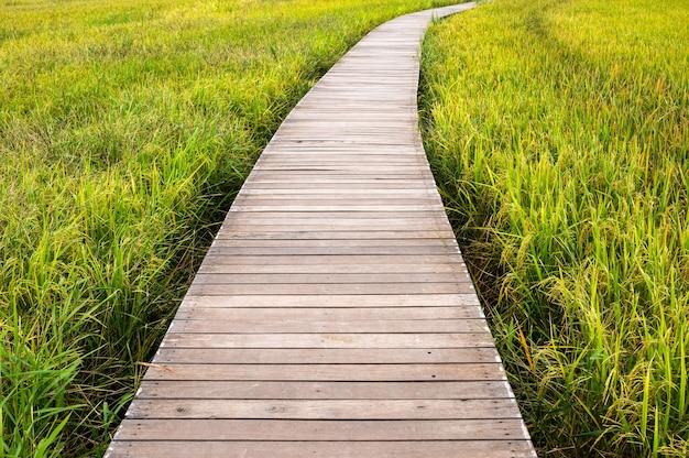 Деревянная дорожка на рисовом поле на плантации в сельской местности