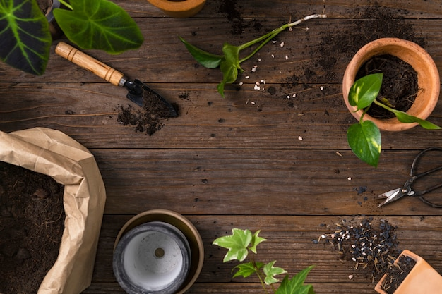 Wooden plant background with the gardening tools for hobby