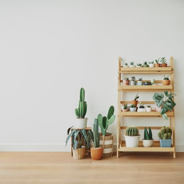 空白の壁に木製の植物の棚