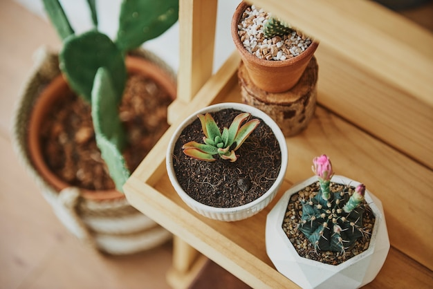귀여운 작은 선인장이 있는 나무 식물 선반 무료 사진