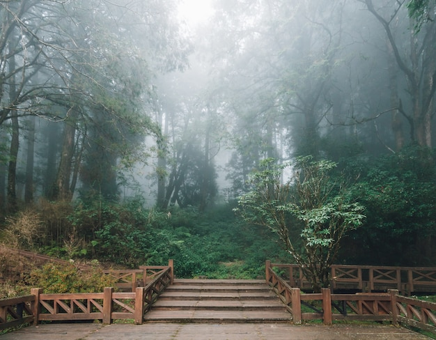Wooden platform with cedar trees and fog in the forest in alishan national forest recreation area in winter in chiayi county, alishan township, taiwan.