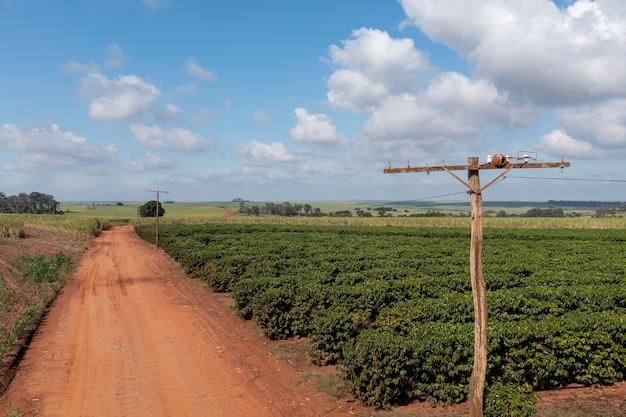 Деревянный столб с домиком, сделанный птицами из глины, рядом кофейная плантация и грунтовая дорога.