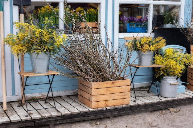 Wooden porch of house with willow branches and yellow mimosa