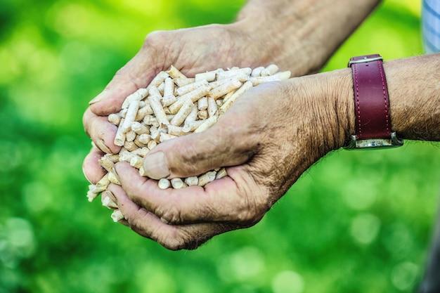 Деревянные прессованные гранулы из биомассы в руке старик.