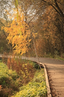 Wooden road in a park in autumn