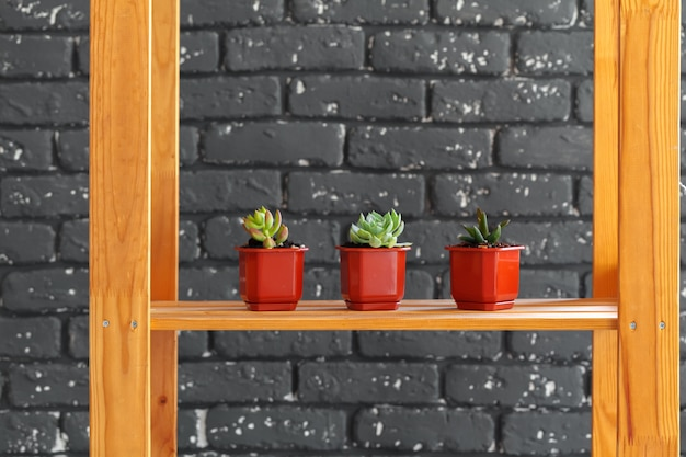 Wooden shelf with home decor plants