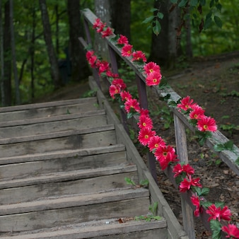 Wooden staircase in a forest, thurso, quebec, canada