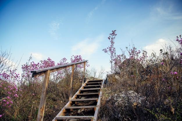 바위와 푸른 하늘에 대 한 관목 사이 언덕에 난 간 나무 계단, 아래에서 볼.