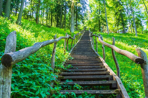 Wooden stairs going up on the mountain and forest