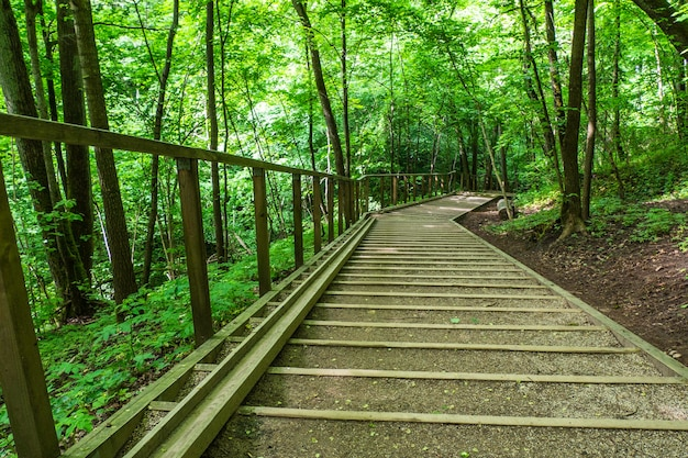 Wooden stairs hiking path in the forest at summer season.