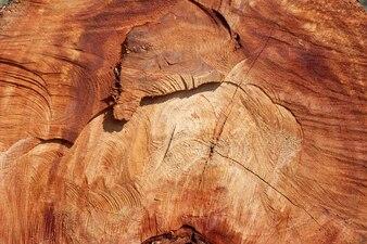 木の切り株の背景。