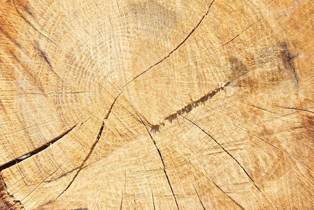 Деревянный пень можно использовать в качестве фона