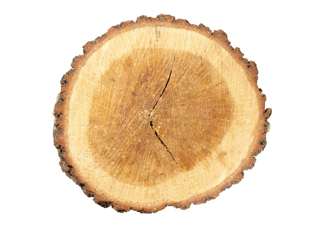 Деревянный пень, изолированные на белом.