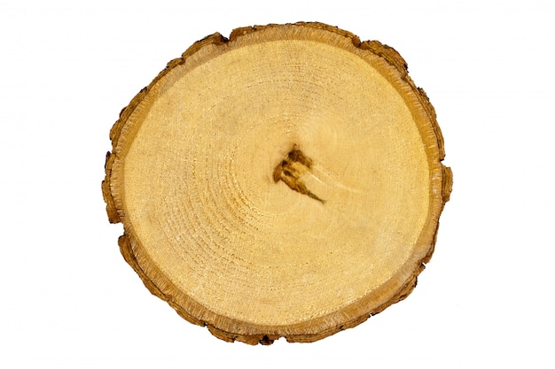 Wooden stump, round cut down tree texture birch, white background isolated
