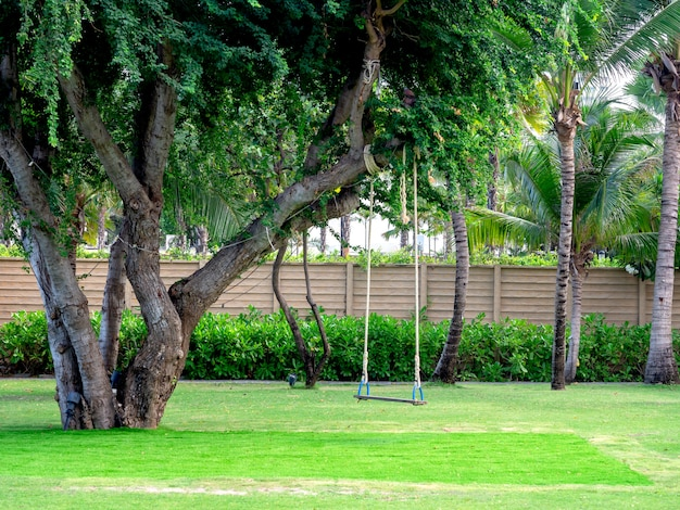 Wooden swing hanging from the big tree.