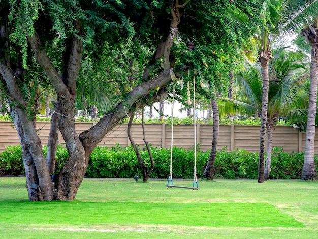 Деревянные качели, свисающие с большого дерева.